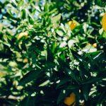 Investing in health shouldn't be like making lemonade